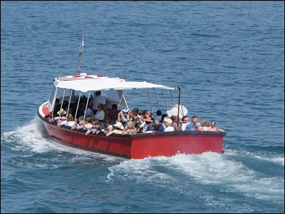 Take a boat trip from New QUay Pier to see Dolphins and Seals